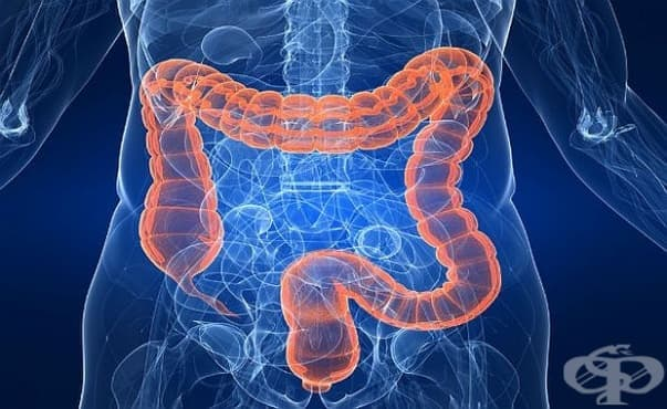Прочистването на дебелото черво може да носи повече вреда, отколкото полза - изображение