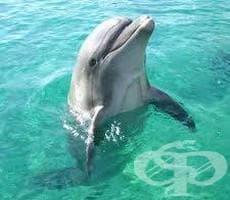Устройство ще разпознава речта на делфините - изображение