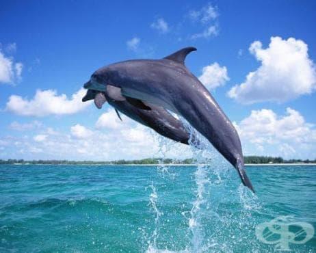 Рибари VS делфини - изображение