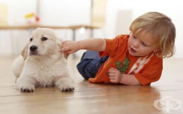 Децата избират играта с домашен любимец пред братчето или сестричето си - изображение