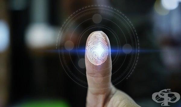 Добрият захват на човешките пръсти се дължи на механизъм, контролиращ тяхната влажност - изображение