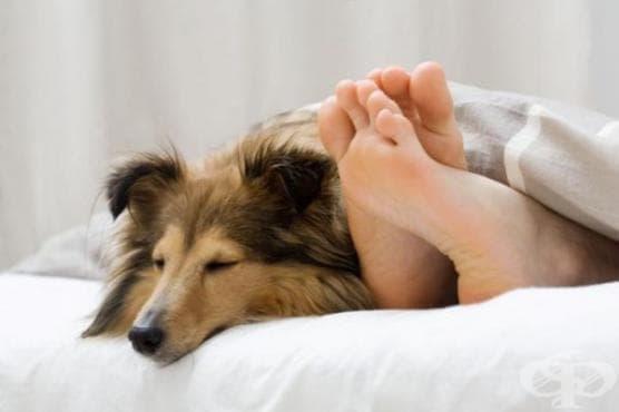 Домашният любимец в спалнята може да подпомогне добрия сън - изображение