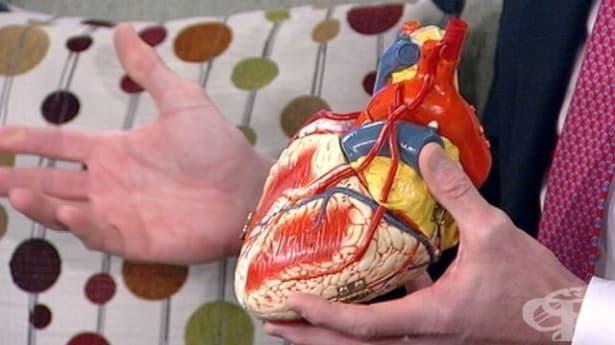 Добър кардиолог – Как да сме сигурни, че поверяваме здравето си в ръцете на специалист? - изображение