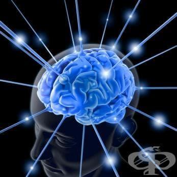 Еволюцията на мозъка ни е достигнала предела си - изображение