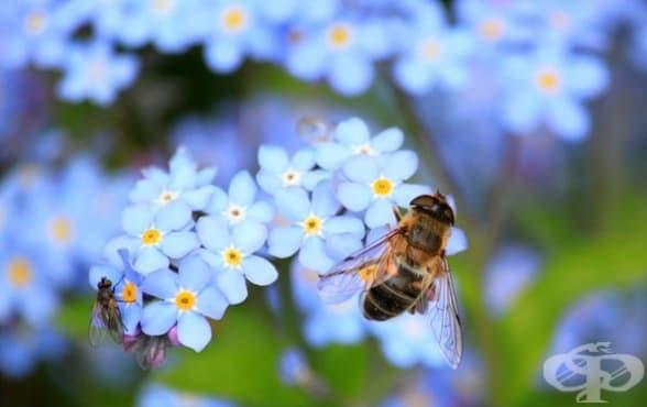 Холандски град превърна стотици автобусни спирки в домове за пчели - изображение