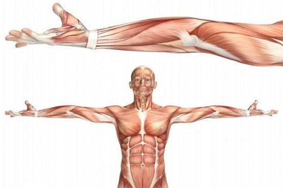 Генът VPS39 предизвиква слабост в мускулите при пациенти с диабет тип 2  - изображение