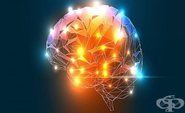 Мозъкът улавя собствените си грешки - изображение