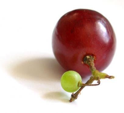Ресвератролът в гроздето топи килограми - изображение