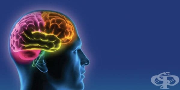 Мозъкът избира храната според нейния цвят - изображение