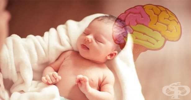 Според ново проучване хълцането може да бъде ключово за мозъчното развитие на новородените - изображение
