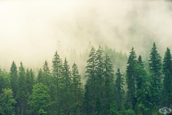 За какво могат да помогнат разходките в иглолистните гори - изображение