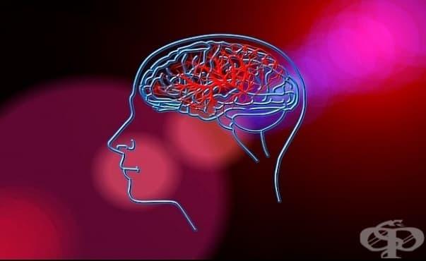 Състоянието на чревната флора влияе на възстановяването на пациенти от инсулт - изображение