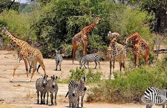 3/4 от животинските видове може да изчезнат от Земята през следващите векове - изображение