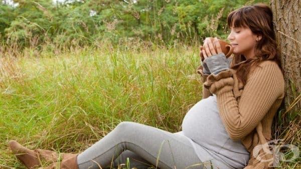 Приемът на женско биле по време на бременност води до хиперактивност и лошо запаметяване при детето - изображение