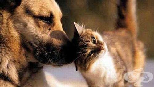 """Осиновителна кампания """"Ще те обичам - само ме вземи"""" за четириноги от приюта в Бургас - изображение"""