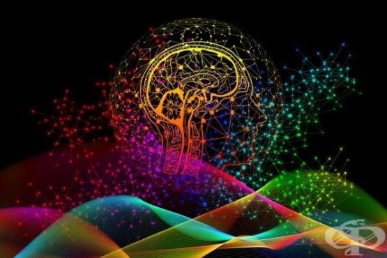 Как мозъкът на самотните и мъдрите хора реагира на различни емоции - изображение