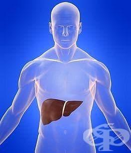 """Капките """"Хепавитал"""" пречистват черния дроб и подобряват работата на останалите органи - изображение"""