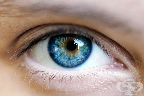 Нарушение на зрението и сънни артерии - каква е връзката - изображение