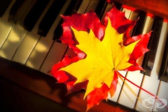 Кленовите листа могат да се справят с бръчките - изображение