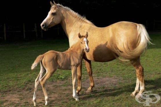 Млякото от кобила съхранява младостта - изображение