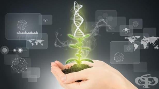 Методът КРИСПР измества ГМО културите - изображение