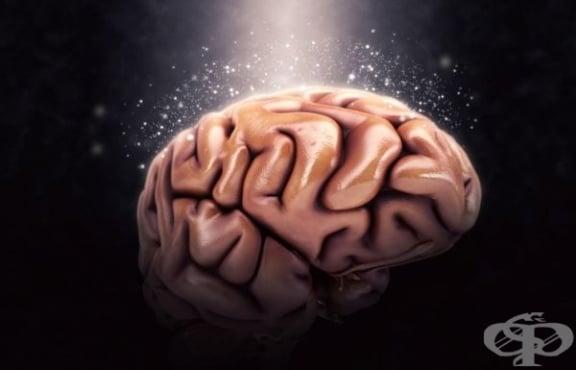 Оптималното кръвно налягане поддържа мозъка по-млад - изображение