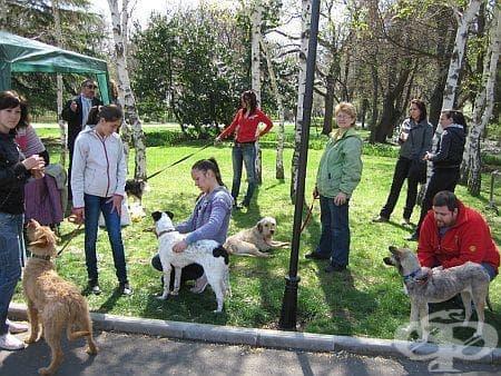 Кампанията за осиновяване на кучета в Бургас завърши - шест четириноги са с нови стопани - изображение