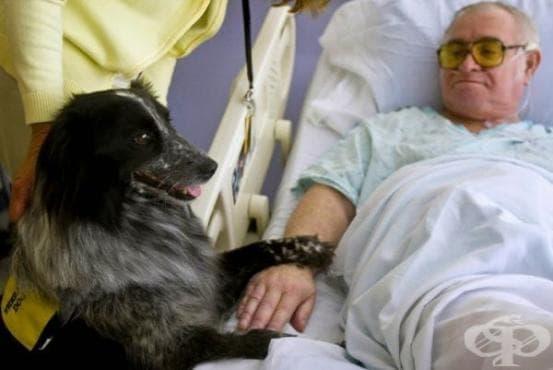 Кучетата усещат човешката болка и опитват да я облекчат - изображение