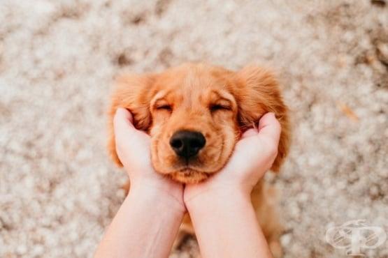 Диабетът при кучето увеличава риска и за неговия собственик  - изображение