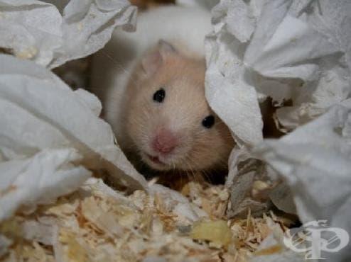 Произлезли сме от мишките - изображение