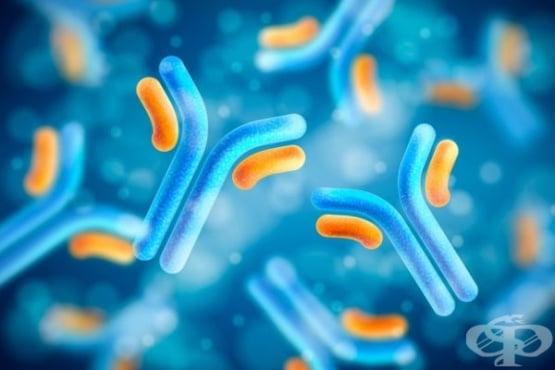 Терапията с моноклонални антитела е безопасна и ефективна при трансплантирани пациенти с COVID-19 - изображение