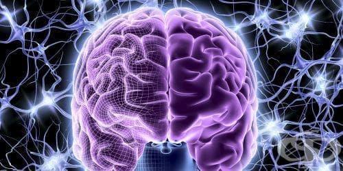 Някои части на човешкия мозък имат нужда от десетилетия, за да съзреят - изображение
