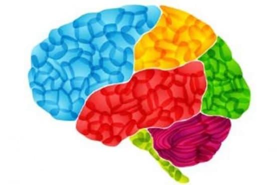Характерът зависи от формата на мозъка - изображение