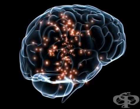 Човек използва само 10 процента от мозъка си - изображение