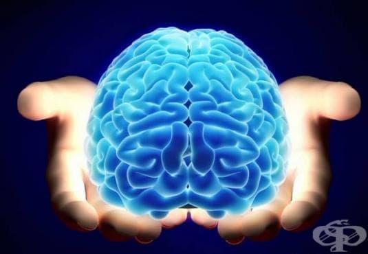 Мъжкият мозък остарява по-бързо от женския - изображение