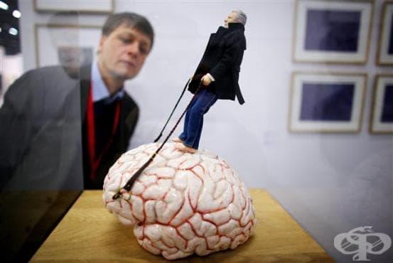 Какво се заблуждаваме, че знаем за мозъка - изображение