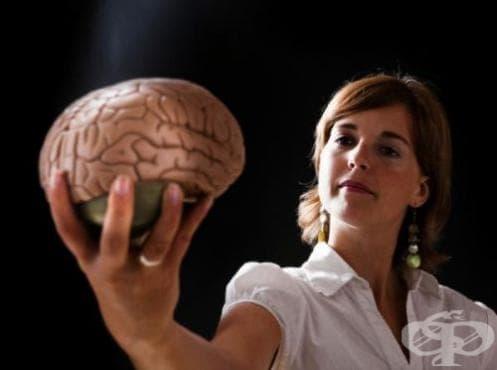 Европейски учени създават модел на човешкия мозък - изображение