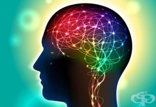 Човешкият мозък избира сам в какво да вярва - изображение