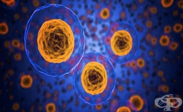Здравите тъкани в човешкото тяло също съдържат мутирали клетки - изображение