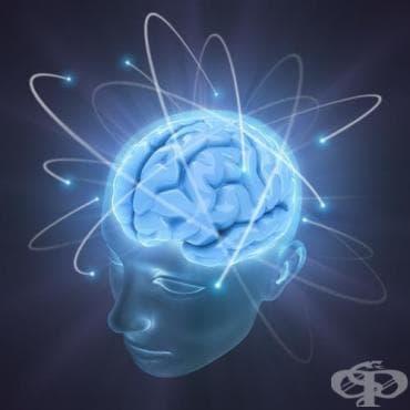 Музикалното обучение стимулира мозъчната активност - изображение