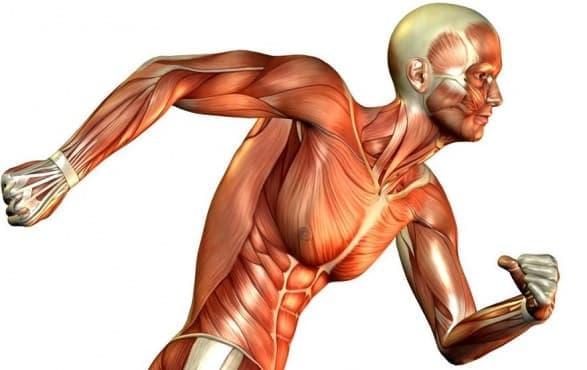 Запознайте се с 10-те ненужни части на тялото - изображение