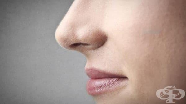 Формата на носа зависи от климата, не само от гените - изображение
