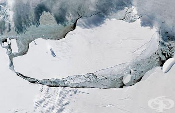 Неизвестна за науката екосистема е открита в айсберга, отцепил се от Антарктида - изображение