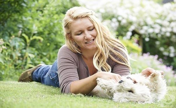Случайното одраскване или ухапване от куче може да не е безобидно - изображение