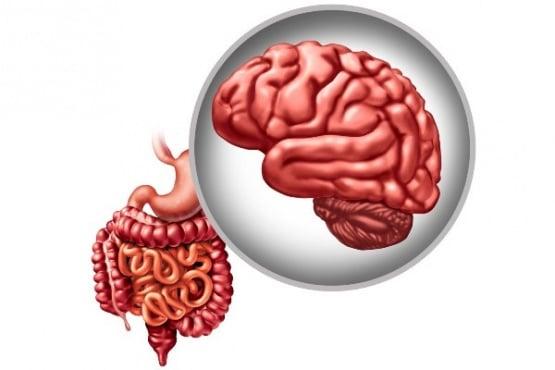 Ново проучване сочи, че специфични чревни бактерии могат да намалят тежестта на болестта на Паркинсон - изображение