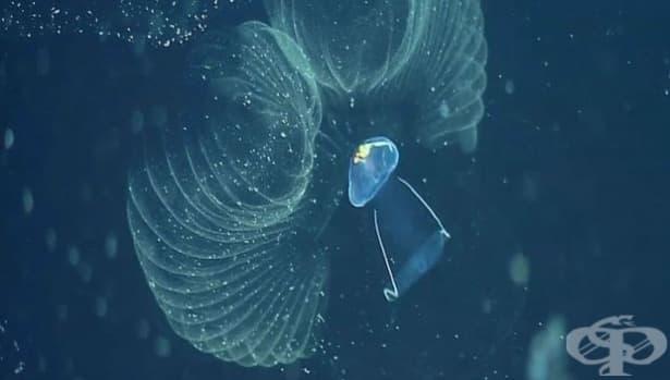 Пластмасовите наночастици вредят  на Световния океан - изображение