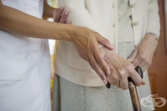 Плодът, който пази мозъка от деменция - изображение