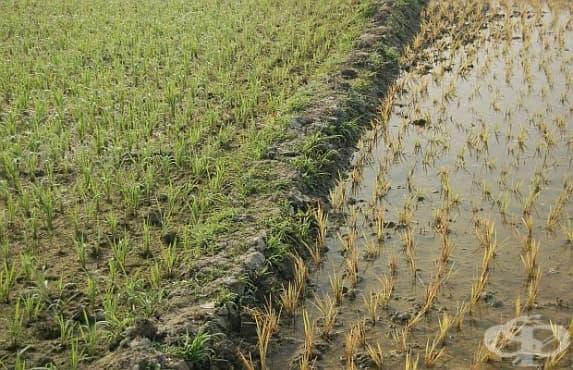 Производството на храна е изчерпало драстично водните запази  - изображение