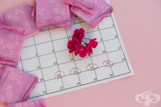 Полименорея - менструация няколко пъти в месеца - изображение