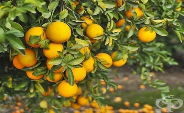 Яденето на портокали всеки ден пречи на появата на макулна дегенерация - изображение